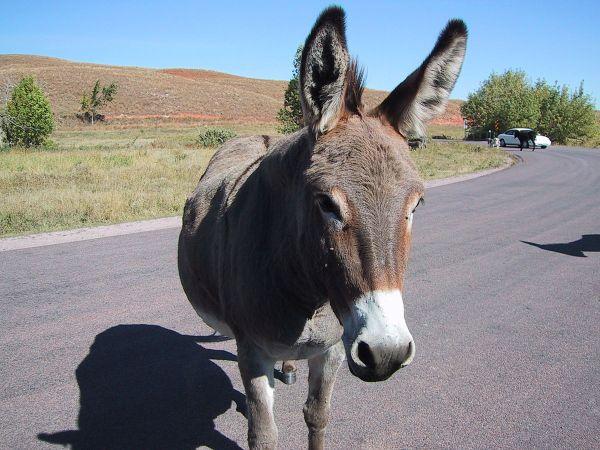 1200px-Donkey-01
